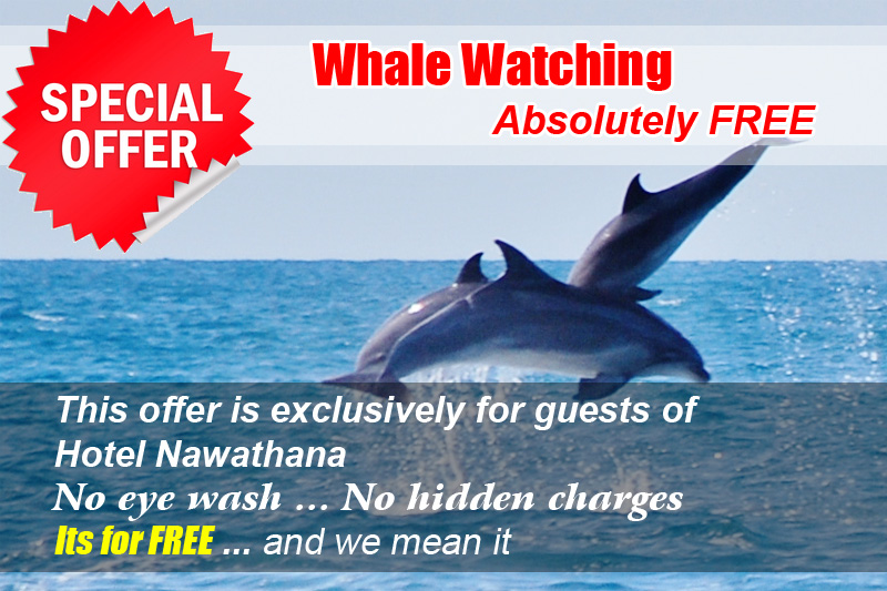 Free whale watching hotel nawathana generally you will be charged lkr 6000 per person for whale watching by a luxury cruise speed liner this is the most suitable and safety vessel with an voltagebd Gallery